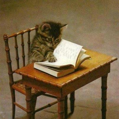 Chat-Lecteur.jpg