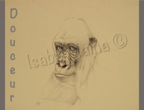 Gorille Isabel M8736586599181518_n.jpg