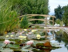 presentation_jardins aquatiques01_xl.jpg